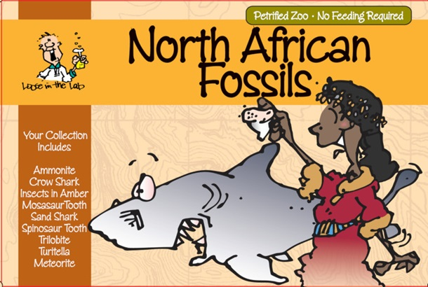 North African Fossils