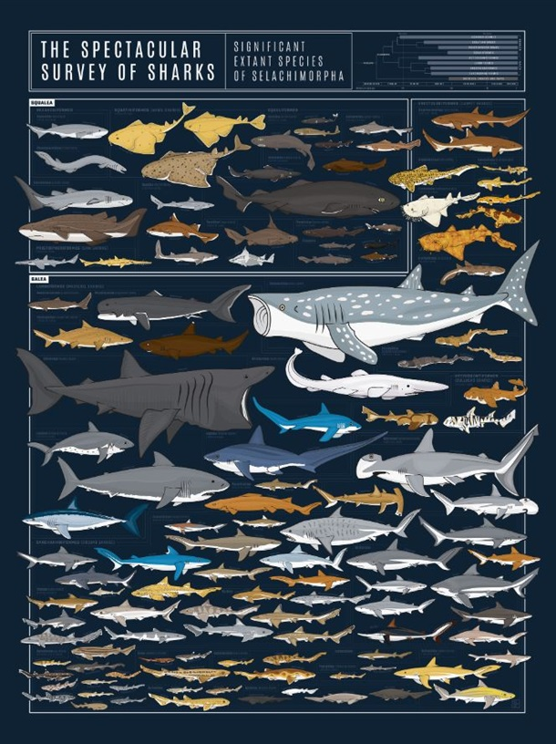 The Spectacular Survey of Sharks Print