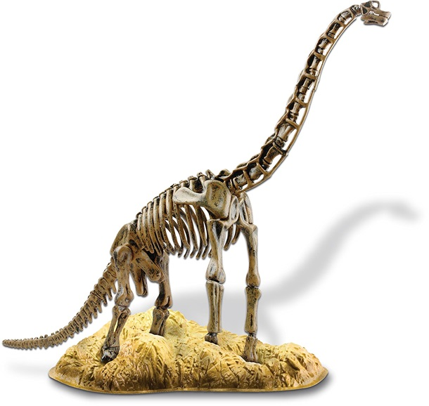 Brachiosaurus Skeleton Model Kit