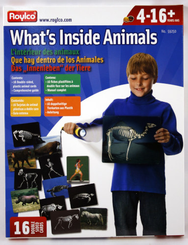 What's Inside Animals